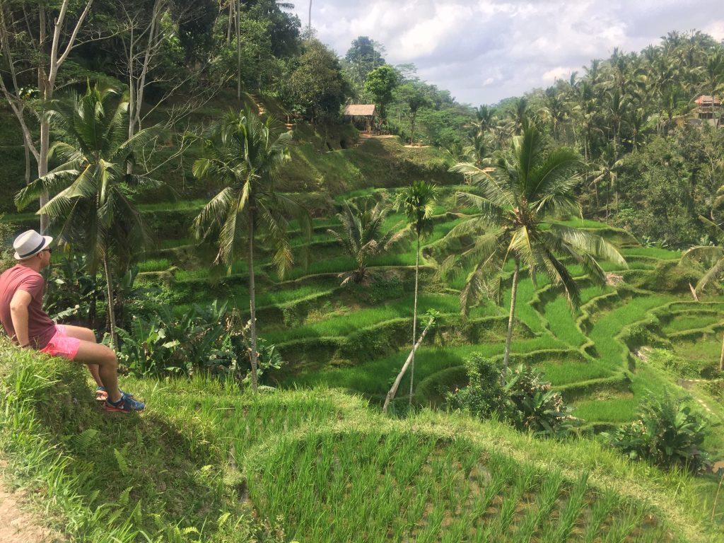 Tegalalang rijstvelden