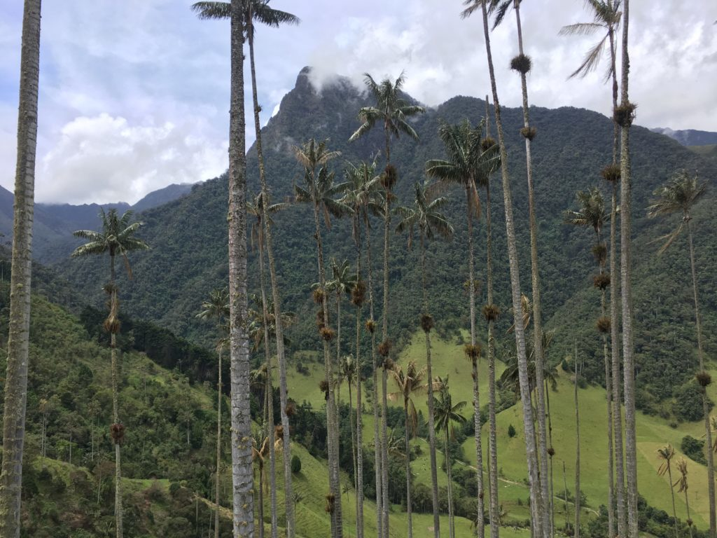 Route Colombia in 3-4 weken: Cocora Valley