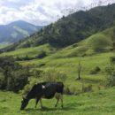 Uitzicht op Valle de Cocora