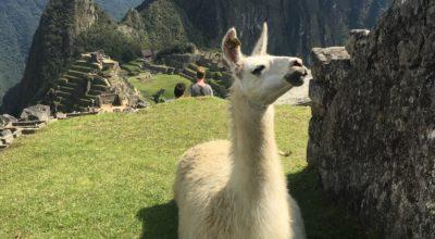 Route Peru in 4-5 weken: Machu Picchu