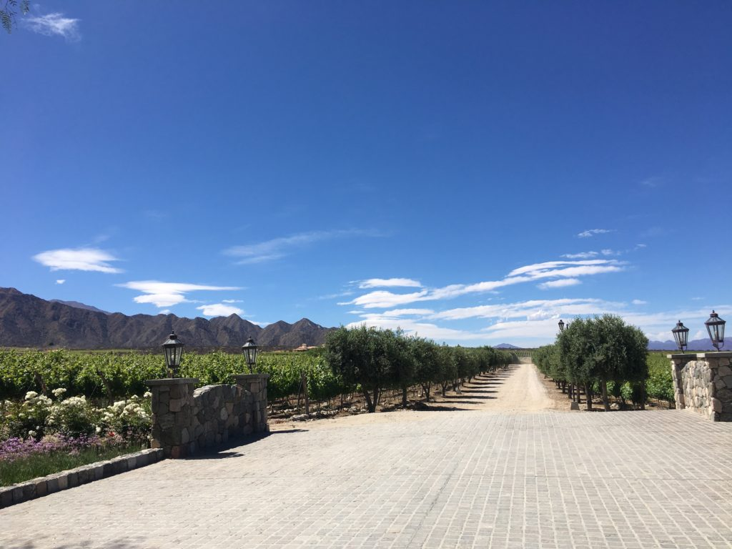 Cafayate: Piatelli Winery