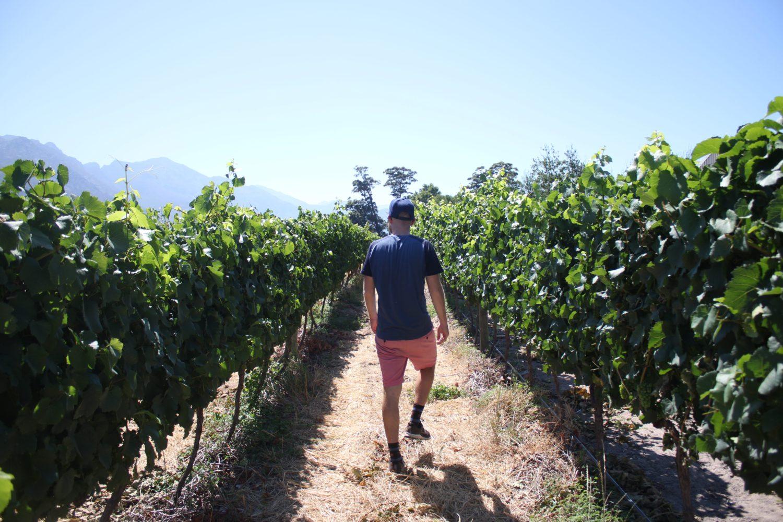 Door de wijngaarden in Franschhoek