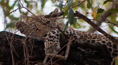 Route door het Krugerpark
