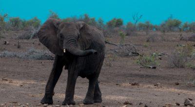 Bezoek aan Addo Elephant National Park