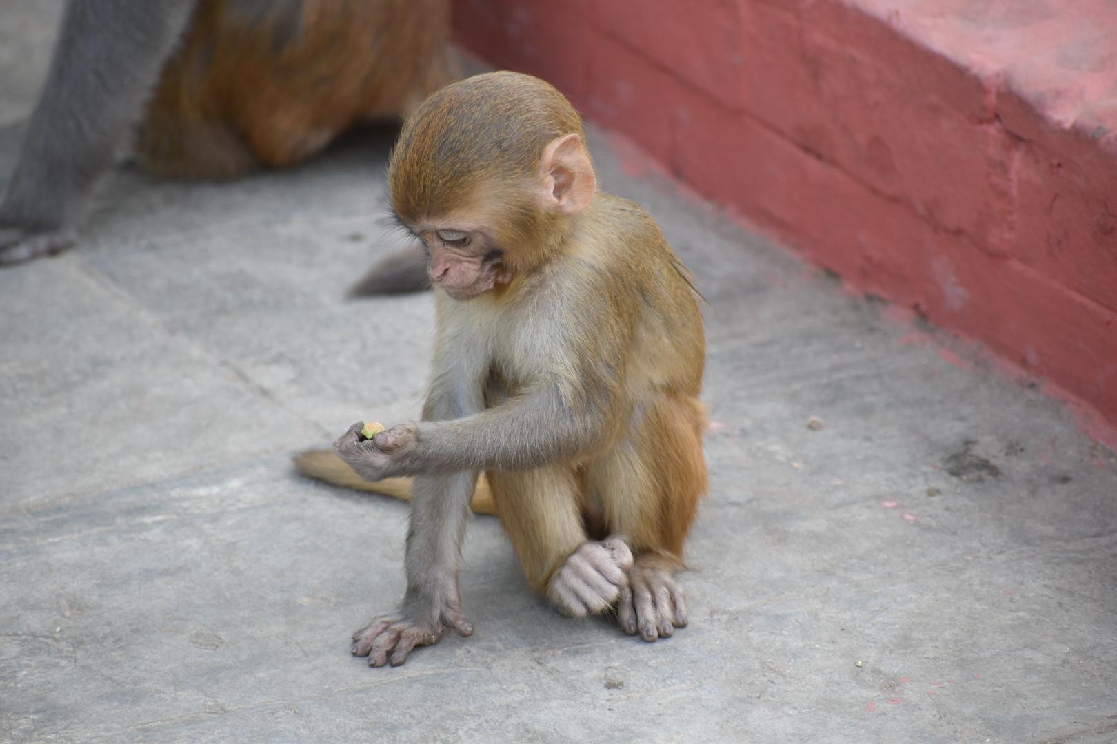 Tips Kathmandu: Monkey Temple