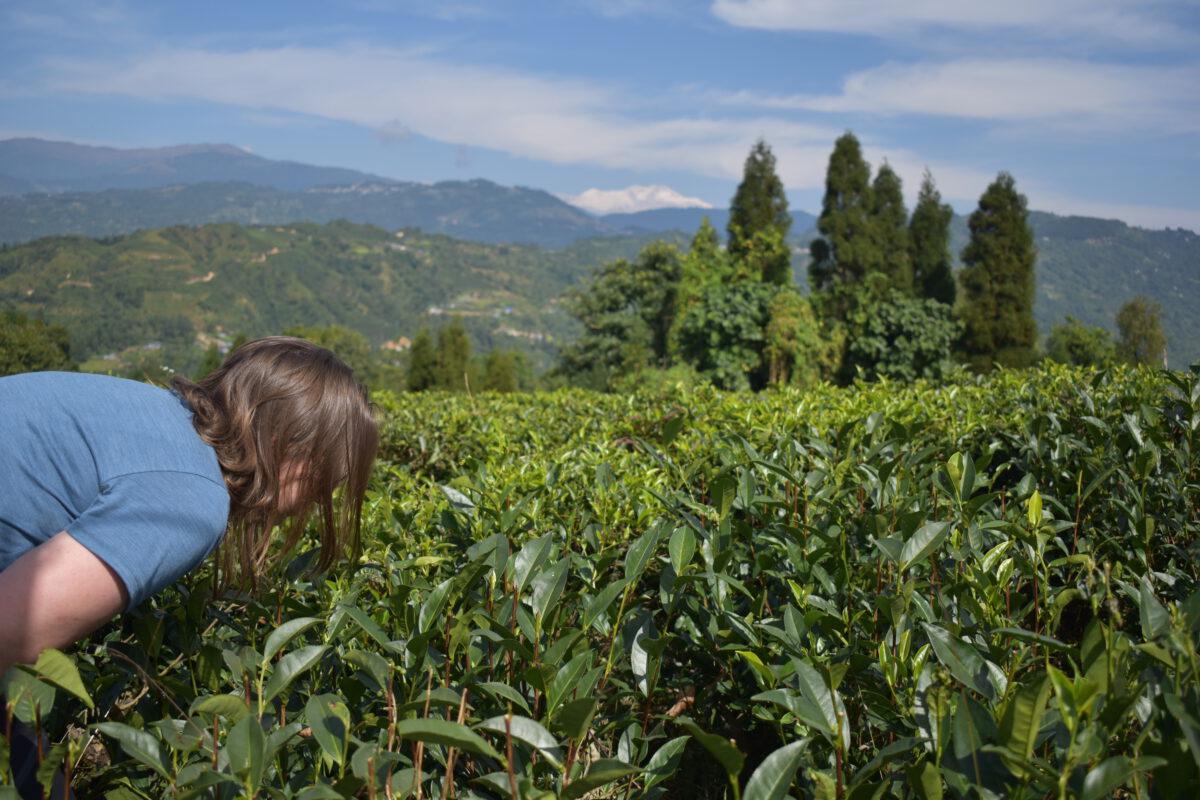 De schitterende omgeving met theeplantages in Shri Antu