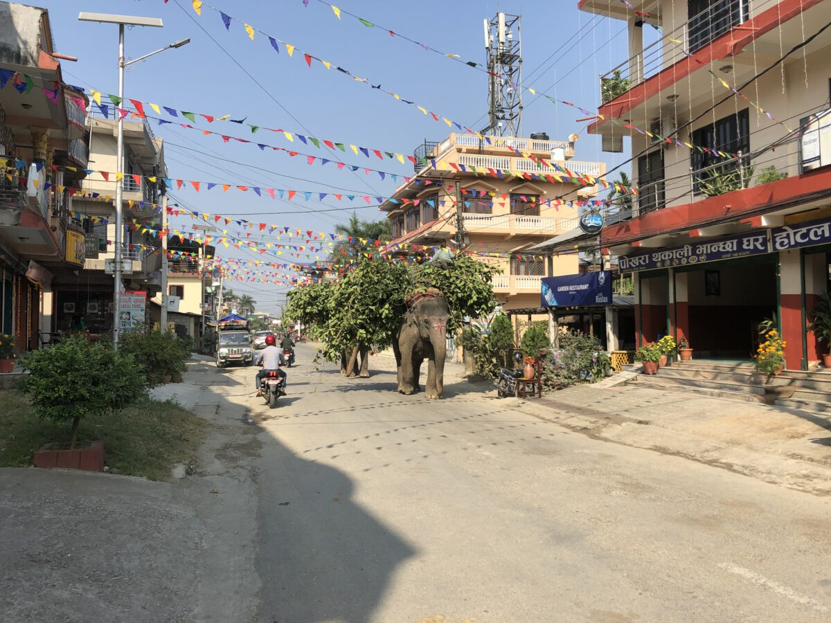 Olifanten door Sauhara, helaas in het bezit van mensen zijn deze olifanten